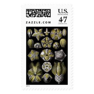 Ernst Haeckel Blastoidea Postage