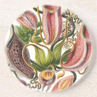 ernst haeckel botanical art drink coaster
