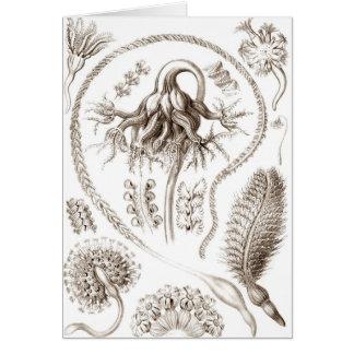 Ernst Haeckel Brown Pennatulida Card