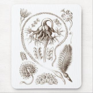 Ernst Haeckel Brown Pennatulida Mouse Pad