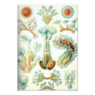 Ernst Haeckel Bryozoa invertebrates Card