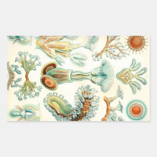 Ernst Haeckel Bryozoa invertebrates Rectangular Sticker