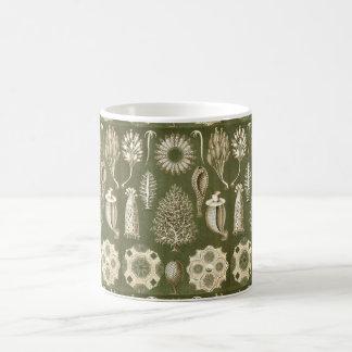Ernst Haeckel Calcispongiae Coffee Mug