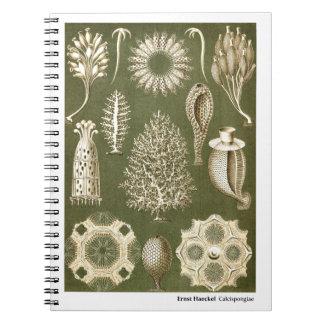 Ernst Haeckel Calcispongiae Spiral Note Books