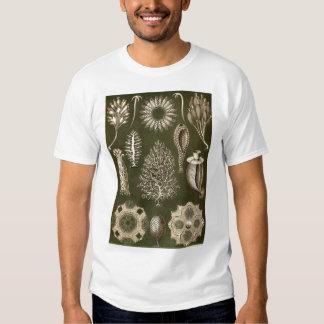 Ernst Haeckel - Calcispongiae Promo Tshirt