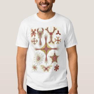 Ernst Haeckel - camiseta de Discoidea Playeras