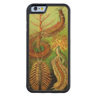 Ernst Haeckel Chaetopoda Funda De iPhone 6 Bumper Arce