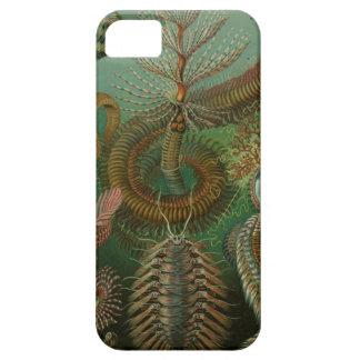 Ernst Haeckel - Chaetopoda iPhone 5 Cases