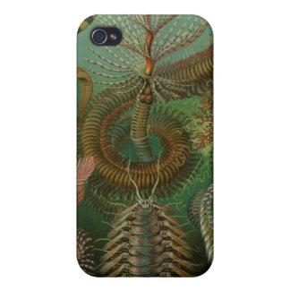 Ernst Haeckel - Chaetopoda iPhone 4 Cases