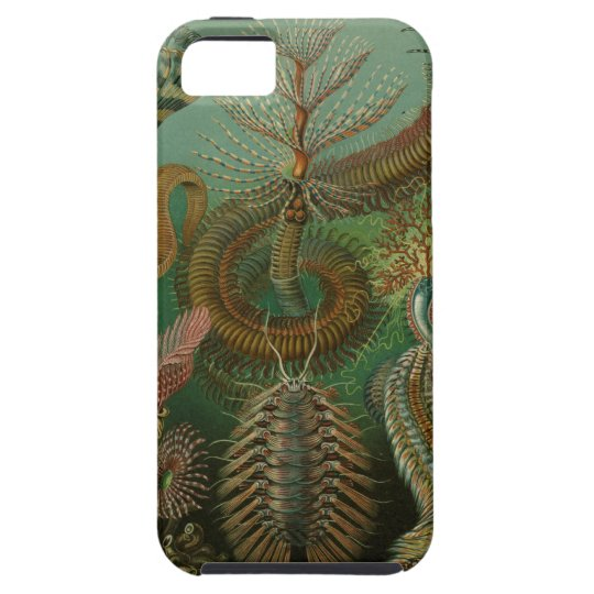 Ernst Haeckel - Chaetopoda iPhone SE/5/5s Case