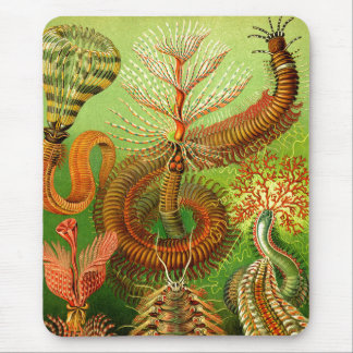 Ernst Haeckel Chaetopoda Mouse Pad