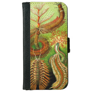 Ernst Haeckel Chaetopoda Wallet Phone Case For iPhone 6/6s