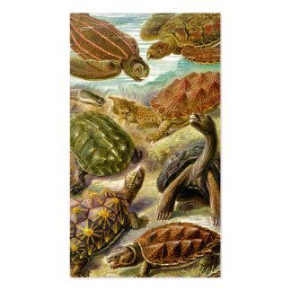 Ernst Haeckel Chelonia Business Card