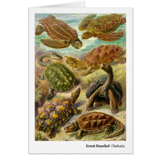 Ernst Haeckel Chelonia Card
