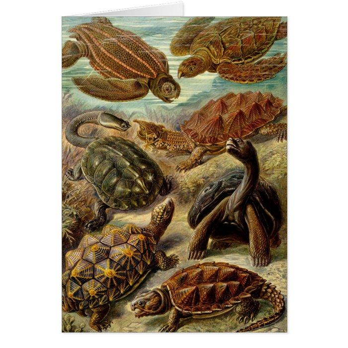 Ernst Haeckel - Chelonia Card