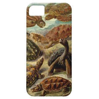 Ernst Haeckel Chelonia iPhone 5 Cover