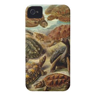 Ernst Haeckel - Chelonia Case-Mate iPhone 4 Cases