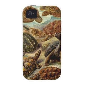 Ernst Haeckel - Chelonia iPhone 4 Cases
