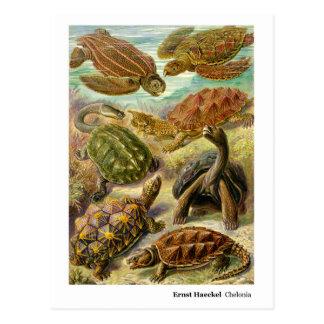 Ernst Haeckel Chelonia New Address Postcard