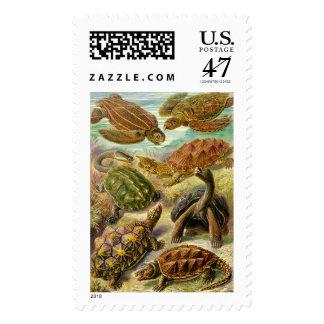 Ernst Haeckel  Chelonia Postage