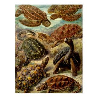 Ernst Haeckel - Chelonia Postcard