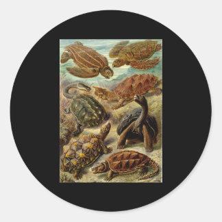 Ernst Haeckel Chelonia Round Stickers