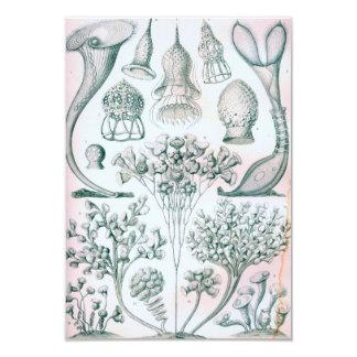 Ernst Haeckel Ciliata Card