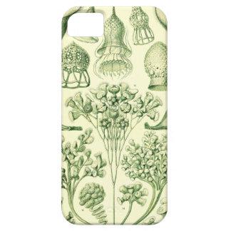 Ernst Haeckel Ciliata iPhone SE/5/5s Case