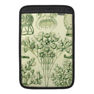 Ernst Haeckel Ciliata MacBook Air Sleeve