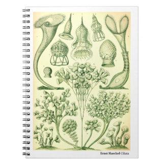 Ernst Haeckel Ciliata Notebooks