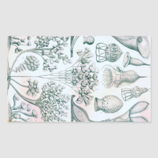 Ernst Haeckel Ciliata Sticker
