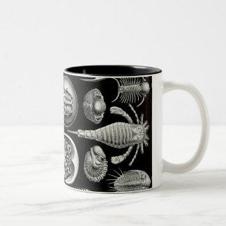Ernst Haeckel  Classic White Mug   Sea Life