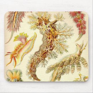 Ernst Haeckel - cojín de ratón del detalle del Nud Tapete De Ratón