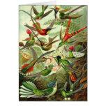 Ernst Haeckel - colibríes del Trochilidae Tarjetas