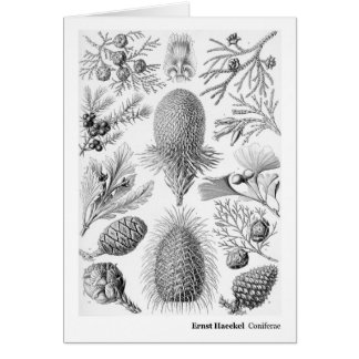 Ernst Haeckel Coniferae Black and White Card