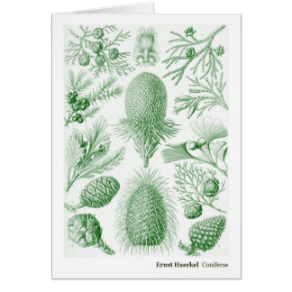 Ernst Haeckel Coniferae Green and White Card