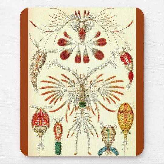 Ernst Haeckel - Copepoda Mouse Pad