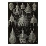 Ernst Haeckel - Cyrtoidea Card