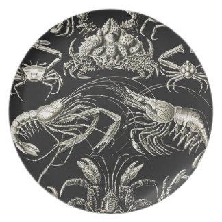 Ernst Haeckel Decapoda Plate
