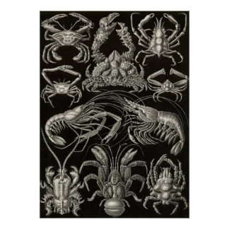 Ernst Haeckel - Decapoda Poster
