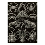 Ernst Haeckel - decápodos Poster