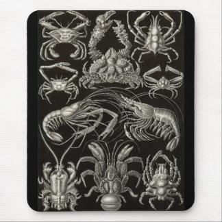 Ernst Haeckel - decápodos Tapetes De Ratones