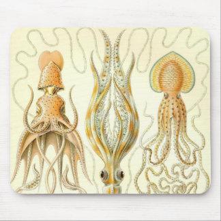 Ernst Haeckel - detalle de Gamochonia Mouse Pad