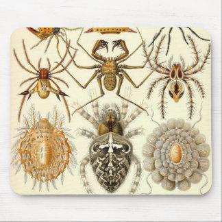 Ernst Haeckel - detalle de los arácnidos Alfombrilla De Ratón