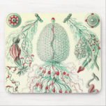 Ernst Haeckel - detalle Siphonphorae4 Tapetes De Ratón
