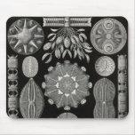 Ernst Haeckel - Diatomea2 Detail3 Mouse Pad