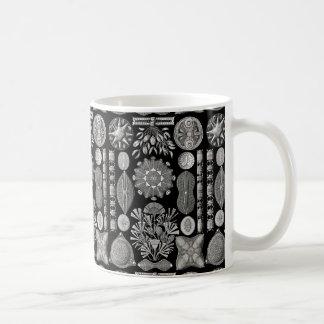 Ernst Haeckel  Diatomea Coffee Mug