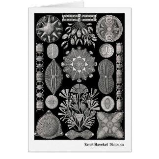 Ernst Haeckel Diatomea Tarjeta De Felicitación