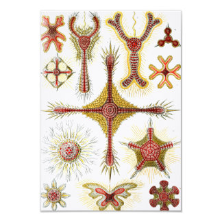 Ernst Haeckel Discoidea Card