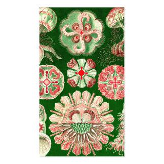 Ernst Haeckel Discomedusae (Aurelia) Business Card